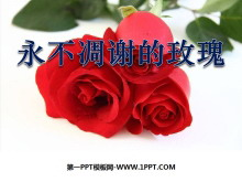 《永不凋谢的玫瑰》PPT课件3