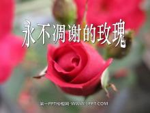 《永不凋谢的玫瑰》PPT课件4
