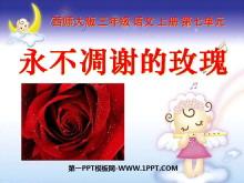 《永不凋谢的玫瑰》PPT课件5