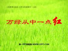 《万绿丛中一点红》PPT课件2