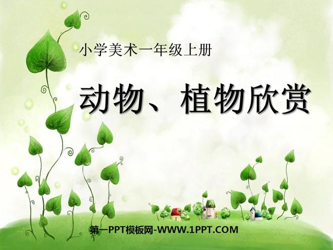 《动物、植物欣赏》PPT课件
