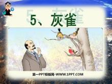 《灰雀》PPT课件4