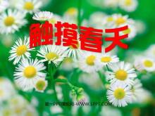 《触摸春天》PPT课件8