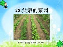 《父亲的菜园》PPT课件8