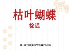 《枯叶蝴蝶》PPT课件3