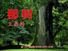 《那树》PPT课件8