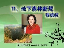 《地下森林断想》PPT课件6