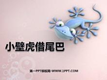 《小壁虎借尾巴》PPT课件8