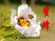 《蜜蜂》PPT课件3