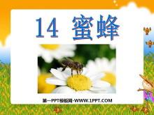《蜜蜂》PPT课件4