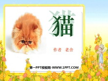 《猫》PPT课件3