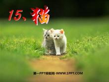 《猫》PPT课件4