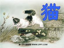 《猫》PPT课件5