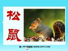 《松鼠》PPT课件7