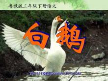 《白鹅》PPT课件8