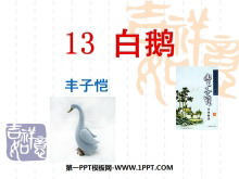 《白鹅》PPT课件9