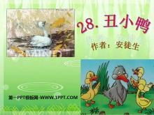 《丑小鸭》PPT课件9