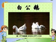 《白公鹅》PPT课件6