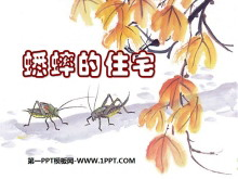 《蟋蟀的住宅》PPT课件8
