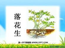 《落花生》PPT课件10