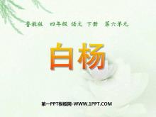 《白杨》PPT课件7