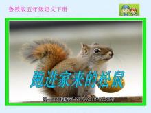《跑进家来的松鼠》PPT课件3