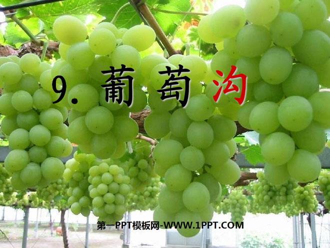 吐鲁番葡萄沟的资料_《葡萄沟》PPT课件9 - 第一PPT