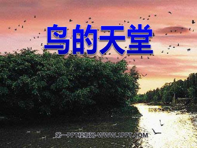 《鸟的天堂》PPT课件2