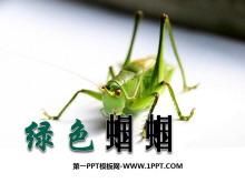 《绿色蝈蝈》PPT课件7