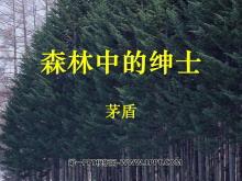 《森林中的�士》PPT�n件