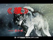 《狼》PPT�n件7