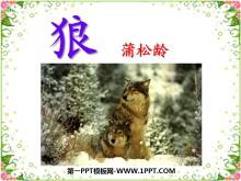 《狼》PPT�n件9