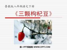 《三颗枸杞豆》PPT课件3