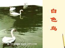 《白色鸟》PPT课件