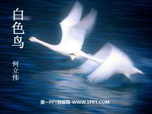 《白色鸟》PPT课件2