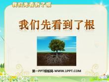 《我们先看到了根》植物的生长变化PPT课件2
