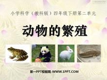 《动物的繁殖》新的生命PPT课件