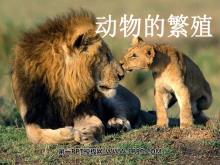 《动物的繁殖》新的生命PPT课件3