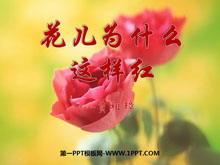 《花儿为什么这样红》PPT课件7