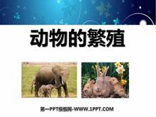 《动物的繁殖》新的生命PPT课件2