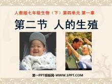 《人的生殖》人的由来PPT课件3