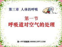 《呼吸道对空气的处理》人体的呼吸PPT课件6