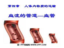 《血流的管道-血管》人体内物质的运输PPT课件