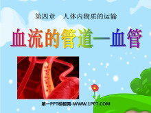 《血流的管道-血管》人体内物质的运输PPT课件2
