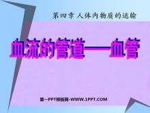 《血流的管道-血管》人体内物质的运输PPT课件4