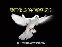 《鸟的生殖和发育》生物的生殖和发育PPT课件4