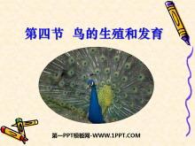 《鸟的生殖和发育》生物的生殖和发育PPT课件5