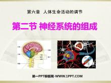 《神经系统的组成》人体生命活动的调节PPT课件4