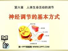 《神经调节的基本方式》人体生命活动的调节PPT课件5