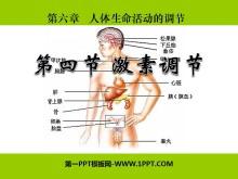 《激素调节》人体生命活动的调节PPT课件3